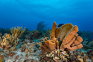 Sponges (Porifera)