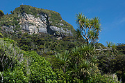 A Cabbage Tree along state highway 6 in Punakaiki, against the backdrop of the limestone cliffs of Pororari River.