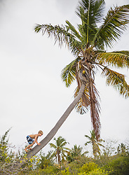 Boy climbing up a coconut tree, Mauritius