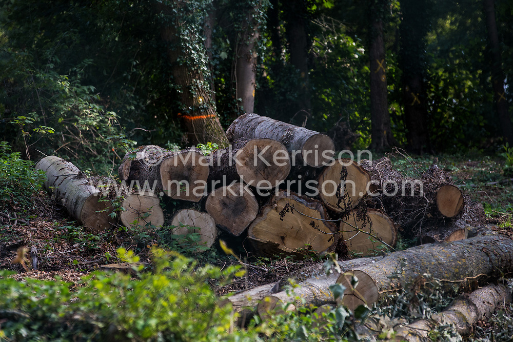 A site where tree felling is currently taking place for the HS2 high-speed rail link is pictured on 11 September 2020 in Denham Green, United Kingdom. Many thousands of trees have already been felled for the HS2 project in the Colne Valley and tree felling is currently taking place in Denham Green, Denham and Harefield.