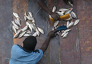 DAR ES SALAAM, TANZANIA.  Customers and fishermen during a fish auction at the main fish market on Barack Obama Drive in Dar es Salaam, Tanzania on Sunday, September 7, 2014.  © Chet Gordon/THE IMAGE WORKS