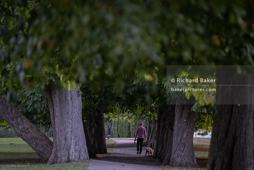 A male walks his dog through a grove of horse chestnut  trees in Ruskin Park, Lambeth, on 17th September 2020, in London, England.