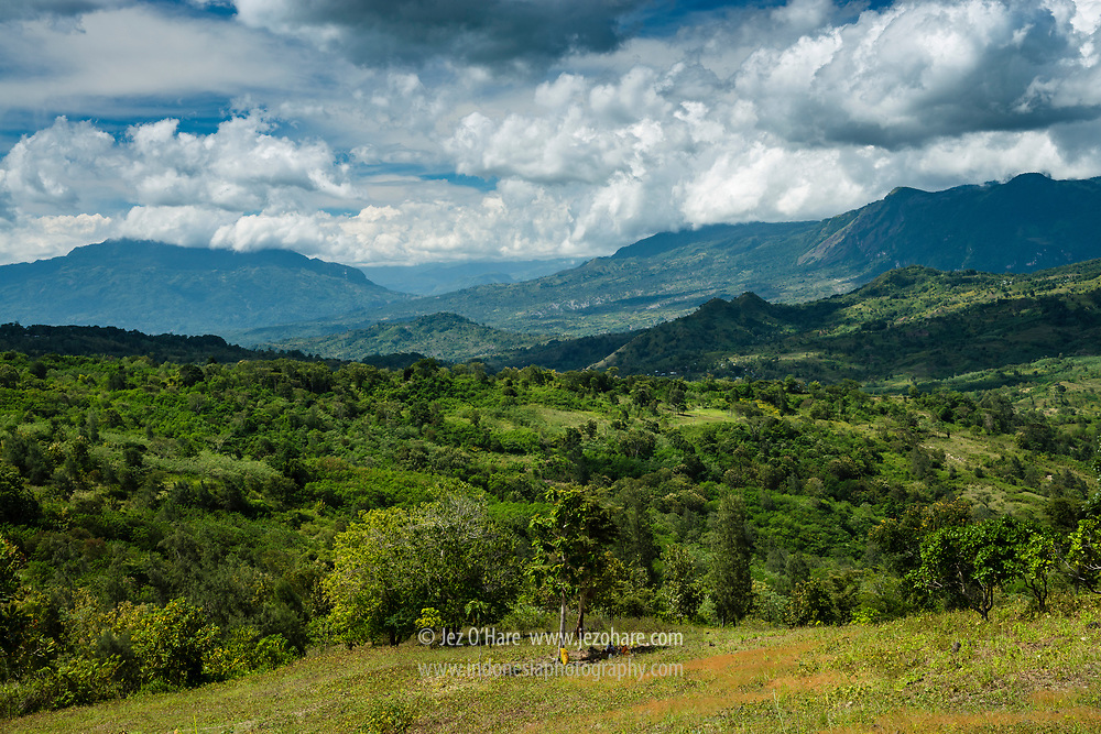 Kabupaten Belu, Pulau Timor, Nusa Tenggara Timur, Indonesia.