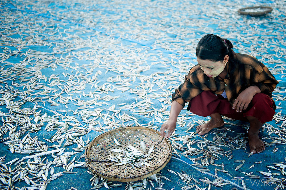 Myanmar, Ngapali. A girl works drying fish.<br />
