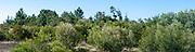 Sao Jacinto Nature Reserve on the shore of Aveiro Lagoon, Portugal