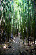 The Bamboo Forest in the Oheo Gulch (Seven Sacred Pools) near Hana, Maui, HI, USA in Haleakala National Park