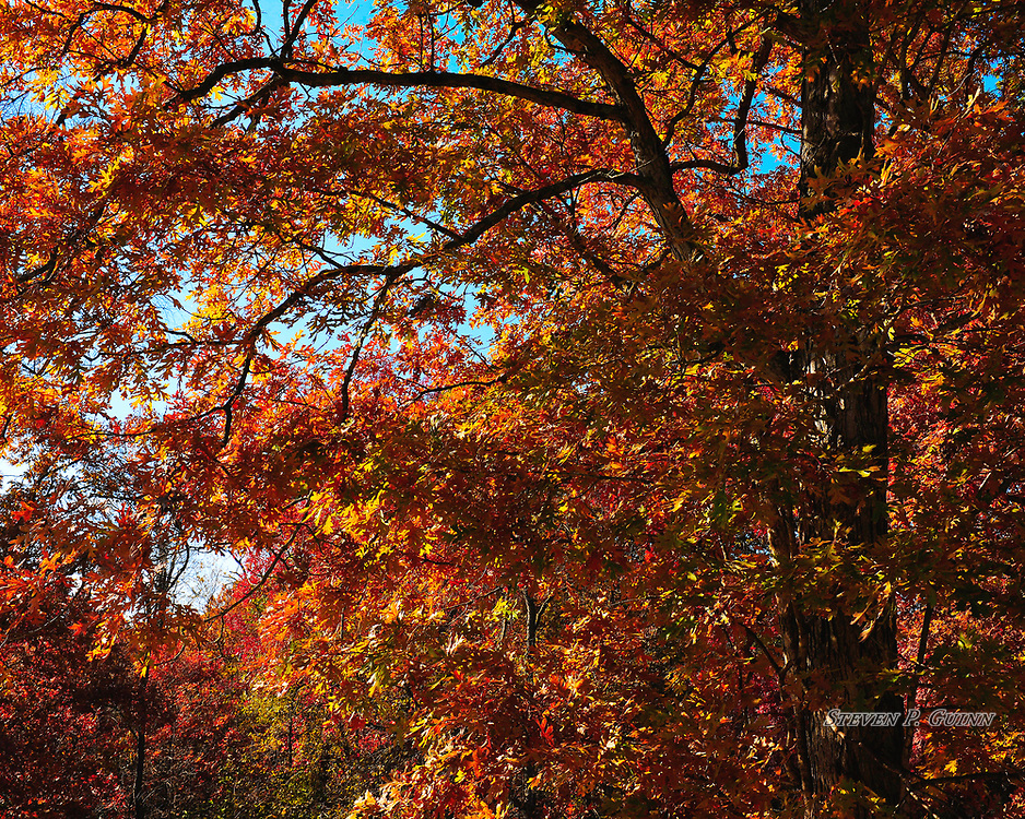 """I captured this nature portrait, along with """"An Autumn Sunset"""", in my backyard on November 5th, 2019. This was the same scene as """"An Autumn Sunset"""", but earlier in the afternoon. Since there was plenty of  daylight (the sun was off-scene to the left), I wanted to emphasize the vast amount of bright, vibrant colors of the foliage. I also wanted to capture the varying levels of details in the near and far trees and foliage to give the image depth. I also like the way shadows were being cast by the sun in the trees and leaves to contrast all of the bright colors.<br /> <br /> Printed on Hahnemühle German Etching paper. Limited to 150 productions per size.<br /> <br /> Framed prints are available in 20"""" x 16"""", 30"""" x 24"""", 40"""" x 30"""", and 50"""" x 40"""" sizes."""