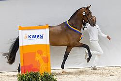 426, Next Pitch US<br /> KWPN Hengstenkeuring 2021<br /> © Hippo Foto - Dirk Caremans<br />  05/02/2021