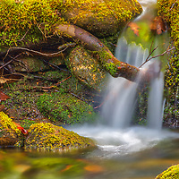 Visiting Central Massachusetts and Willard Brook State Forest is always a lot of photography fun. Trap Falls is one of the many scenic and beautiful New England waterfalls. I discovered this tiny waterfall not far from Trap Falls and was thrilled with all the fresh moss framing it.  <br /> <br /> Massachusetts waterfall photography images are available as museum quality photo, canvas, acrylic, wood or metal prints. Fine art prints may be framed and matted to the individual liking and interior design decoration needs:<br /> <br /> https://juergen-roth.pixels.com/featured/massachusetts-waterfall-juergen-roth.html<br /> <br /> Good light and happy photo making!<br /> <br /> My best,<br /> <br /> Juergen