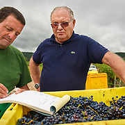 Vineyard manager Michel Bautrait surveying the harvest at Champagne Mumm's vineyard in Mailly. G. H. Mumm & Cie, situated in Reims in northern France, is one of the largest Champagne producers and it is currently ranked 3rd globally based on number of bottles sold. The company is owned by Pernod Ricard.