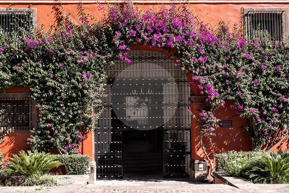 Bougainvillea vine blooms on a wall at the historic Hacienda Galindo, a 16th century estate once owned by the Spanish Conquistador Hernando Cortes, in San Juan del Rio, Queretaro, Mexico. The hacienda is now a hotel and resort owned and operated by Fiesta Americana.