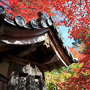 Colorful momiji Japanese maple trees at Nison-in in Kyoto, Japan.