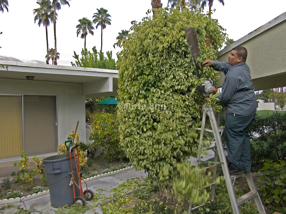 gardener maintaining the bushes