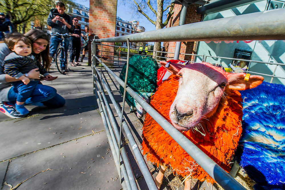 Marco, 14 months from Italy, sees his first sheep! Latitude's coloured sheep and ballet dancers at Sadlers Wells Theatre - to celebrate the 10th anniversary of Latitude Festival, the famous multi-coloured sheep were brought from Suffolk to London. They performed with two dancers, Shaun Dillon and Kim Collins.  Sadler's Wells have helped to make Latitude into the biggest multi-arts festival. This summer the theatre returns for an eighth consecutive year, presenting a diverse programme on the outdoor Waterfront Stage. The Festival runs from 16-19th July at Henham Park. The images are EMBARGOED, to go out with Latitude Festival's arts announcement which will run in the press from 12am on 23.04.15 – the images can therefore be used for print on the 23rd (ie go to papers the afternoon before with this embargo) and can only be used on-line from 00:01 on Thurs 23rd.  Latitude announces the dance and theatre line up at 9am on Thursday 23rd March