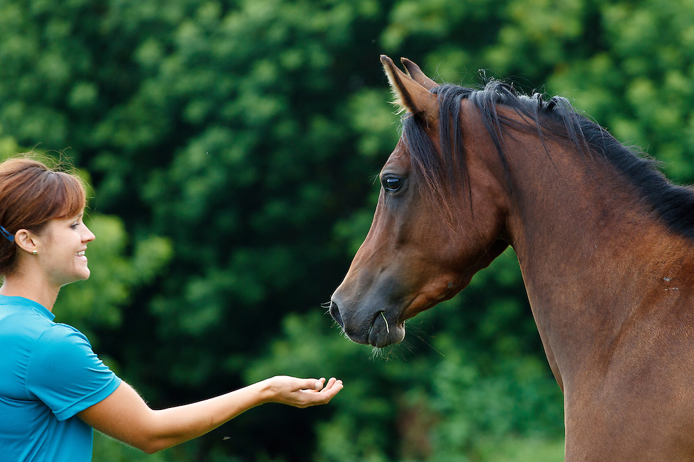 Smiling woman reaching out hand to greet bay Arabian horse in profile