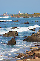 Elephant Seals at Piedras Blancas Beach and Lighthouse, Central California Coast. Image taken with a Nikon D3x and 70-300 mm VR lens (ISO 100, 165 mm, f/11, 1/200 sec)