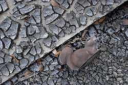 03 Oct, 2005.  New Orleans, Louisiana. Lakeview. Hurricane Katrina aftermath.<br /> The remnants of the lives of ordinary folks, now covered in mud as the flood waters recede. A plastic squirrel rests in the dried, caked mud.<br /> Photo; ©Charlie Varley/varleypix.com