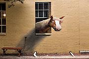 A horse painted along a wall at a barn in historic Charleston, SC.