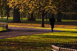 Regent's Park, London, November 4th 2014. A runner makes his way through Regents Park as the autumn sun greets Londoners.