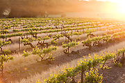 Oldest Cabernet Sauvignon Vineyard in the world. The Barossa Valley is one of Australia's oldest wine regions. Located in South Australia, the Barossa Valley is about 56 km northeast of the city of Adelaide.