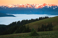 The Bailey Range and Mount Olympus beyond are lighted by morning alpenglow as seen from Hurricane Ridge with the Elwah River valley filled with clouds in Olympic National Park, Washington, USA