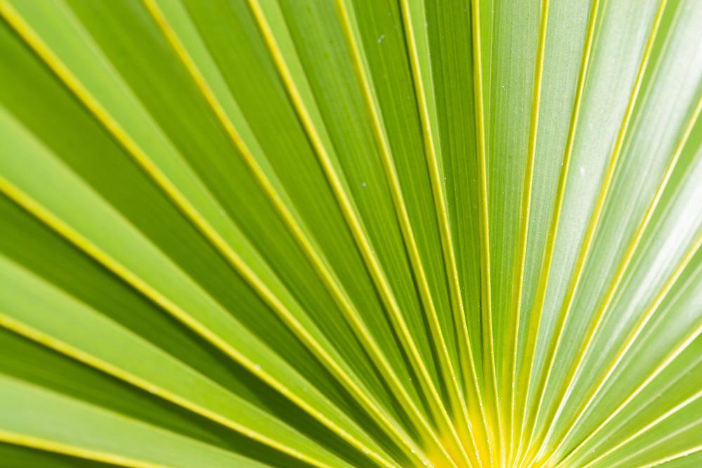 Close up of a green palm leaf