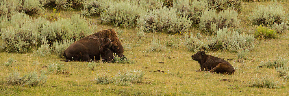 August 7, 2014: Yellowstone National Park Vacation 2014 - Day 5