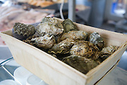 Fresh oysters from the River Deben, Suffolk, England