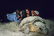 volunteers collect eggs of loggerhead sea turtle, Caretta caretta, nesting on beach, Key Biscayne, Florida ( Western Atlantic Ocean )