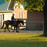 Thoroughbred Racing 2015 - Gallery 01