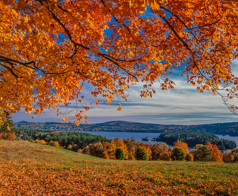 Sugar maples frame fall view of field & Lake Waukewan, mountain ridgelines in distance, Center Harbor, NH