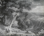 Collecting cinchona bark, the source of Quinine, in South America. Late 19th century engraving.