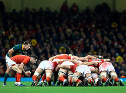Tomos Williams of Wales puts in to the scrum<br /> <br /> Photographer Simon King/Replay Images<br /> <br /> Under Armour Series - Wales v South Africa - Saturday 24th November 2018 - Principality Stadium - Cardiff<br /> <br /> World Copyright © Replay Images . All rights reserved. info@replayimages.co.uk - http://replayimages.co.uk