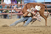 Cole Dorenkamp hangs on to a steer during the steer wrestling competition, Sunday, Aug.  4, 2013, at the Boulder County Fair in Longmont. The CPRA rodeo featured nine events including bareback riding, steer wrestling, tie-down roping, breakaway roping, saddle bronco riding, mixed team roping, open team roping, ladies barrel racing and bull riding.<br /> (Matthew Jonas/Times-Call)