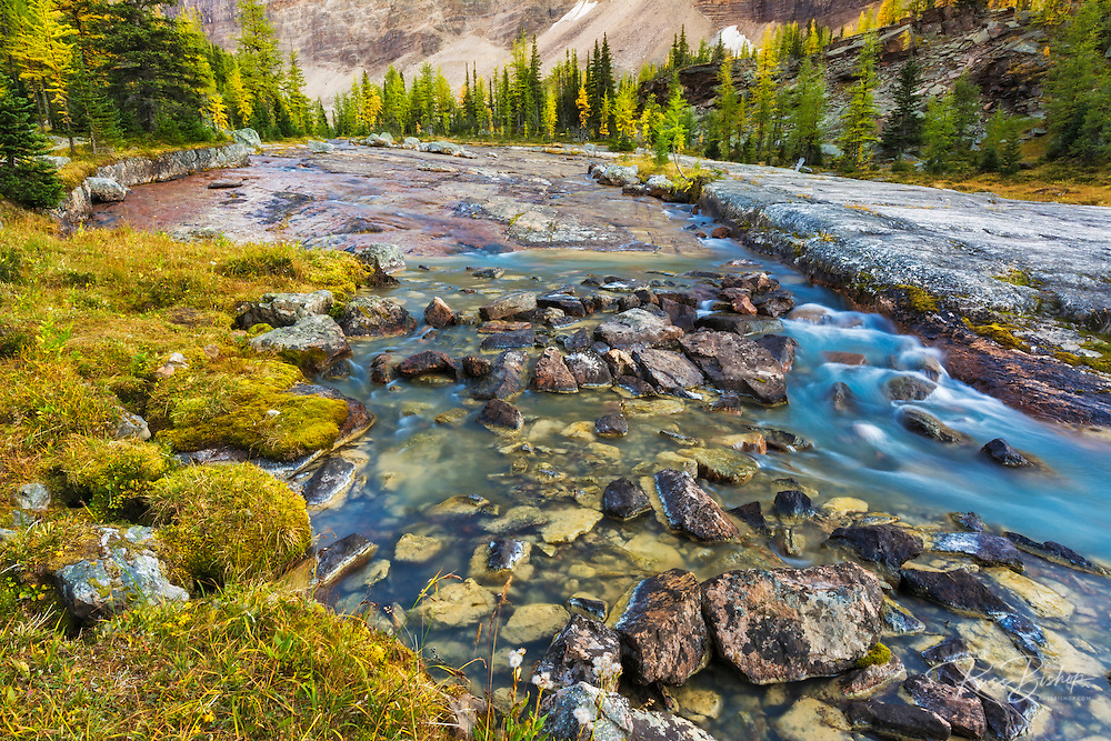 Stream on the Opabin Plateau above Lake O'hara, Yoho National Park, British Columbia, Canada
