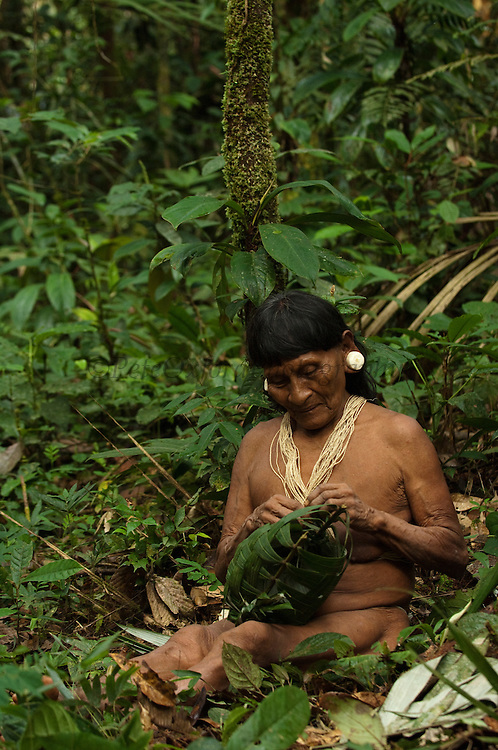 Huaorani Indian woman - Dabe Baiwa. Gabaro Community. Yasuni National Park.<br /> Amazon rainforest, ECUADOR.  South America<br /> She has the typical stretched ear lobes common amoung the Huaorani. They often wear balsa ear plugs.<br /> This Indian tribe were basically uncontacted until 1956 when missionaries from the Summer Institute of Linguistics made contact with them. However there are still some groups from the tribe that remain uncontacted.  They are known as the Tagaeri. Traditionally these Indians were very hostile and killed many people who tried to enter into their territory. Their territory is in the Yasuni National Park which is now also being exploited for oil.