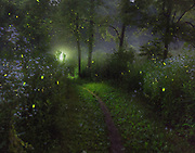 """Firefly Dance - Wetmore Trail<br /> <br /> One of 34 photos chosen from over 15,000 entries in National Geographic Your Shot competition called My Best Photos of 2017. <br /> <br /> Comment from Matt Moyer, National Geographic Photographer -  """"This is such a dreamy image! You saw a magical scene and worked to capture it beautifully. I appreciate that you were transparent in how you captured the image - with multiple exposures. Magical photograph!"""" <br /> <br /> Available sizes:<br /> 11"""" x 14"""" print <br /> 11"""" x 14"""" canvas gallery wrap<br /> 11"""" x 14"""" print <br /> <br /> See Pricing page for details. <br /> <br /> Please contact me for custom sizes and print options including canvas wraps, metal prints, assorted paper options, etc. <br /> <br /> I enjoy working with buyers to help them with all their home and commercial wall art needs."""