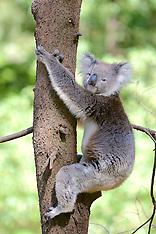 1197 Australia