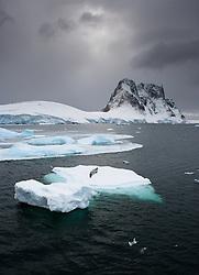 Crabeater Seal (Lobodon carcinophaga) on ice in Antarctica