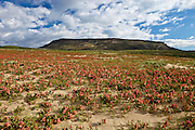 Killpecker Sand Dunes in the Red Desert of Wyoming with wildflowers blooming in early summer