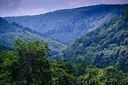 The Vosges Mountains near the village of  Mollkirch, Alsace, France<br /> <br /> (c) Andrew Wilson   Edinburgh Elite media
