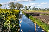 11-05-2020: Oldelamer, Weststellingwerf - langs de Hogeweg