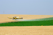 Israel, Negev, Potato field being sprayed with insecticide by a low flying aeroplane May 2007