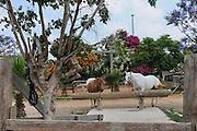 Israel, Golan Heights, Horse ranch