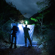 Two researchers collect insects drawn in by a black light and mercury vapor light, Aguacate and Zapotén in Parque Nacional Sierra de Bahoruco