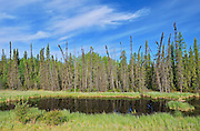 Boreal forest and wetland<br /> Steen River<br /> Alberta<br /> Canada