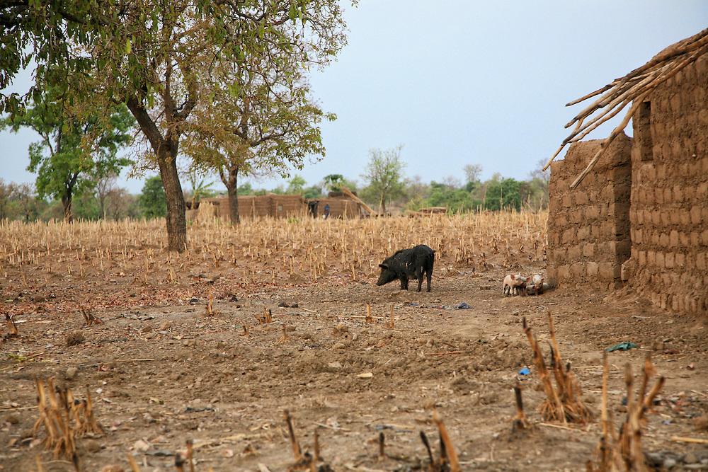 Remote Village in the Upper West Region of Ghana West Africa