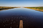 2015/03/04 – Monte Maiz, Argentina: Flooded road between soy fields on Monte Maiz region.. Floods are really common nowadays in the region, because the soil can't absorb much water since pestifies make it harder and less absorvent. Another reason is that soy needs less water than other crops, so the water under the soil its just a mere 30cm from the surface making floods common when rain falls. (Eduardo Leal)