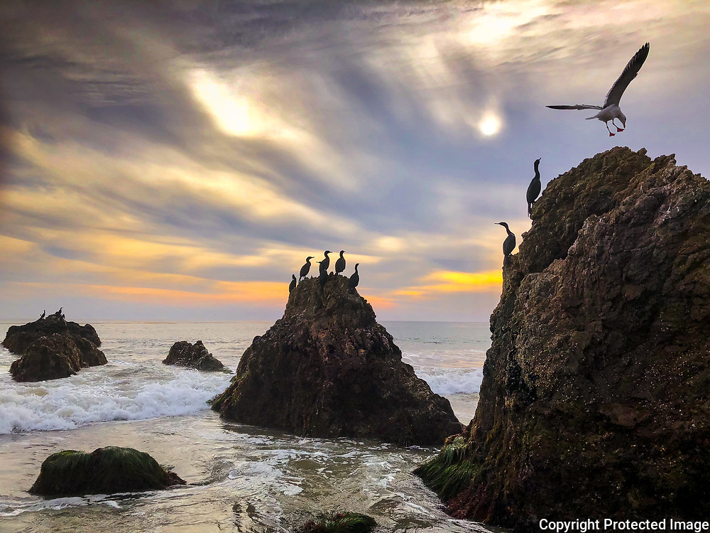Giant boulders are an inviting perch for cormorants and a landing seagull at El Matador State Beach in Malibu, CA.