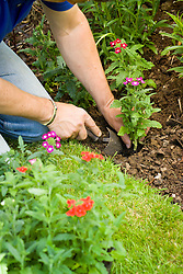 Adding bedding plants to fill a gap in a border
